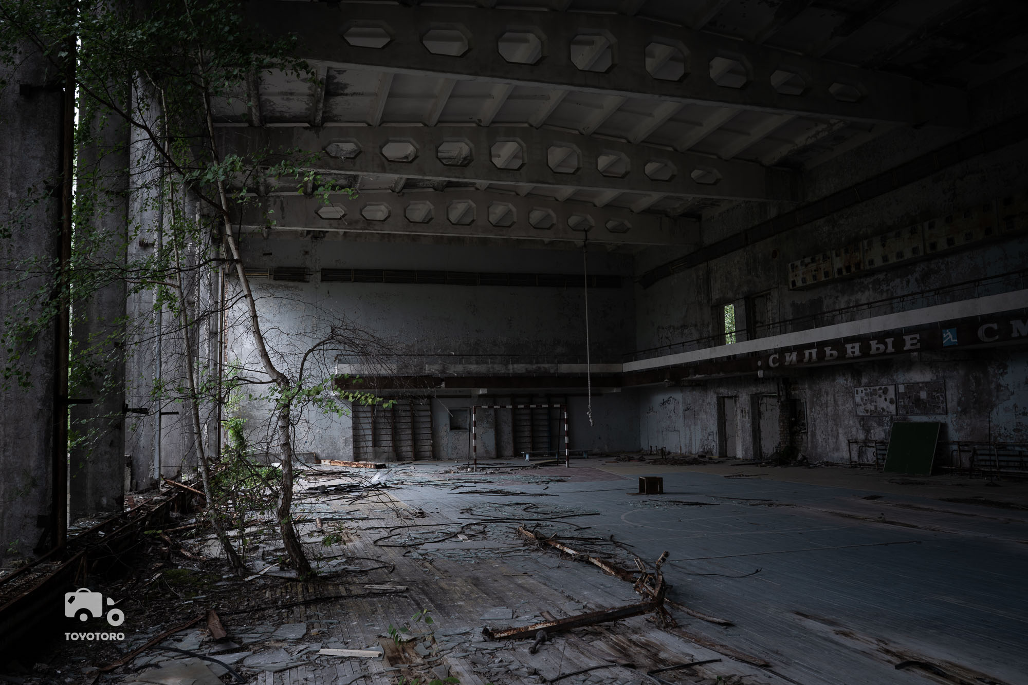Nature is taking over abandoned sports hall